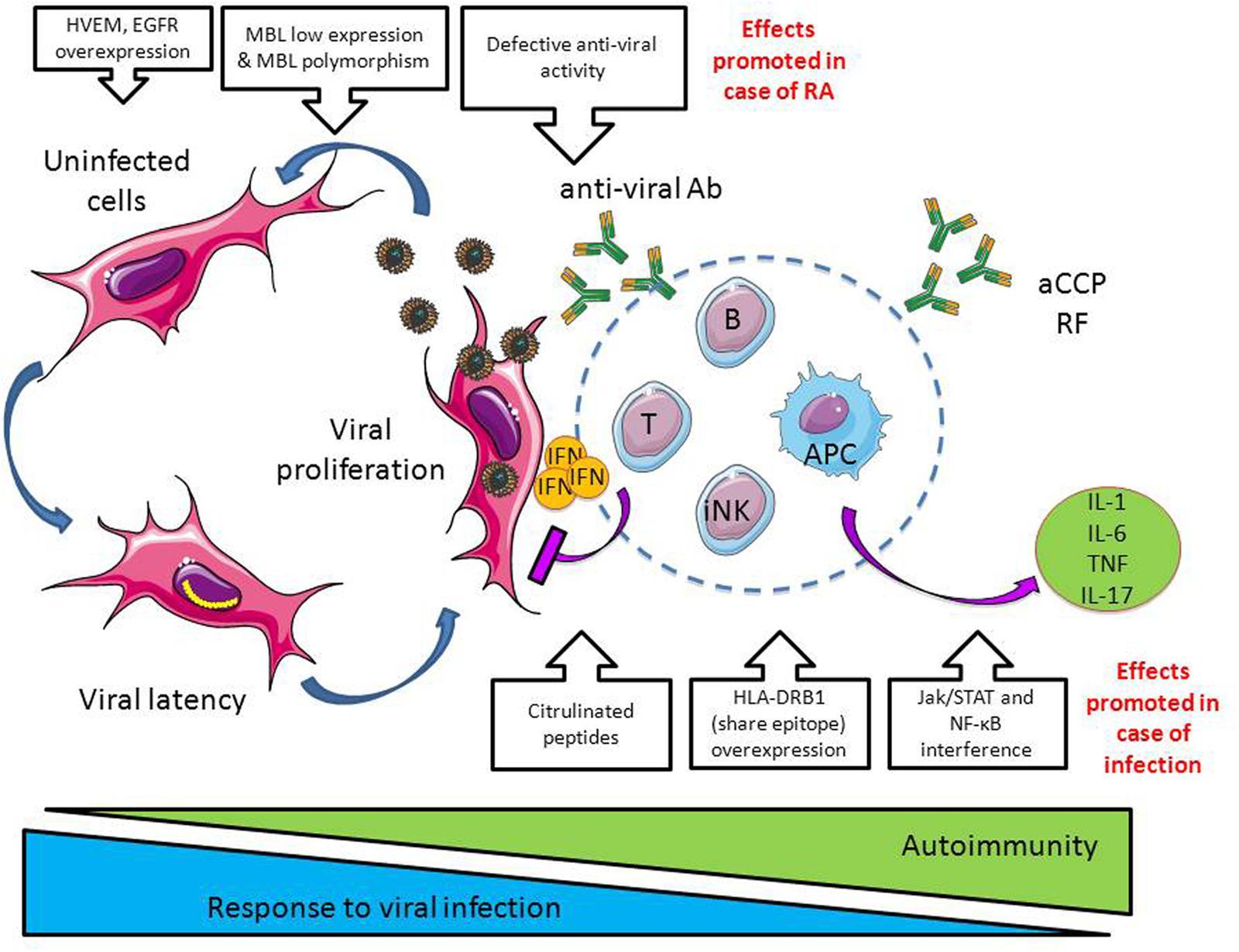 Infection & Autoimmunity | ELIM RHEUMATIC CENTRE