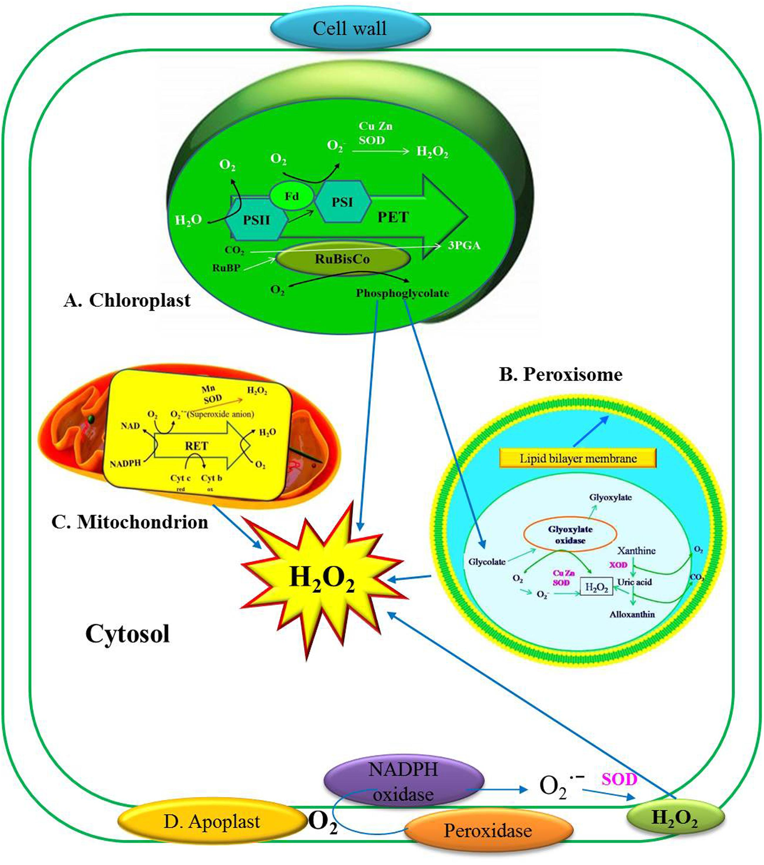 download Molecular Endocrinology of