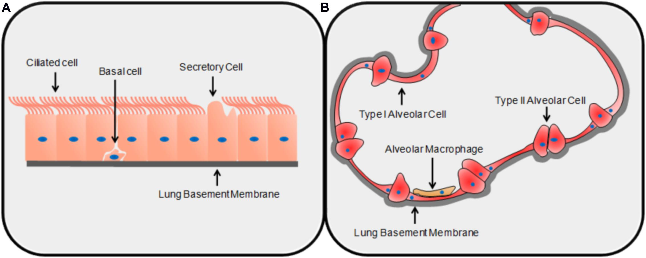 a critical review of a primary Geoepidemiology of primary sclerosing cholangitis: a critical review  primary sclerosing cholangitis (psc) is a chronic cholestatic liver disease of unknown .