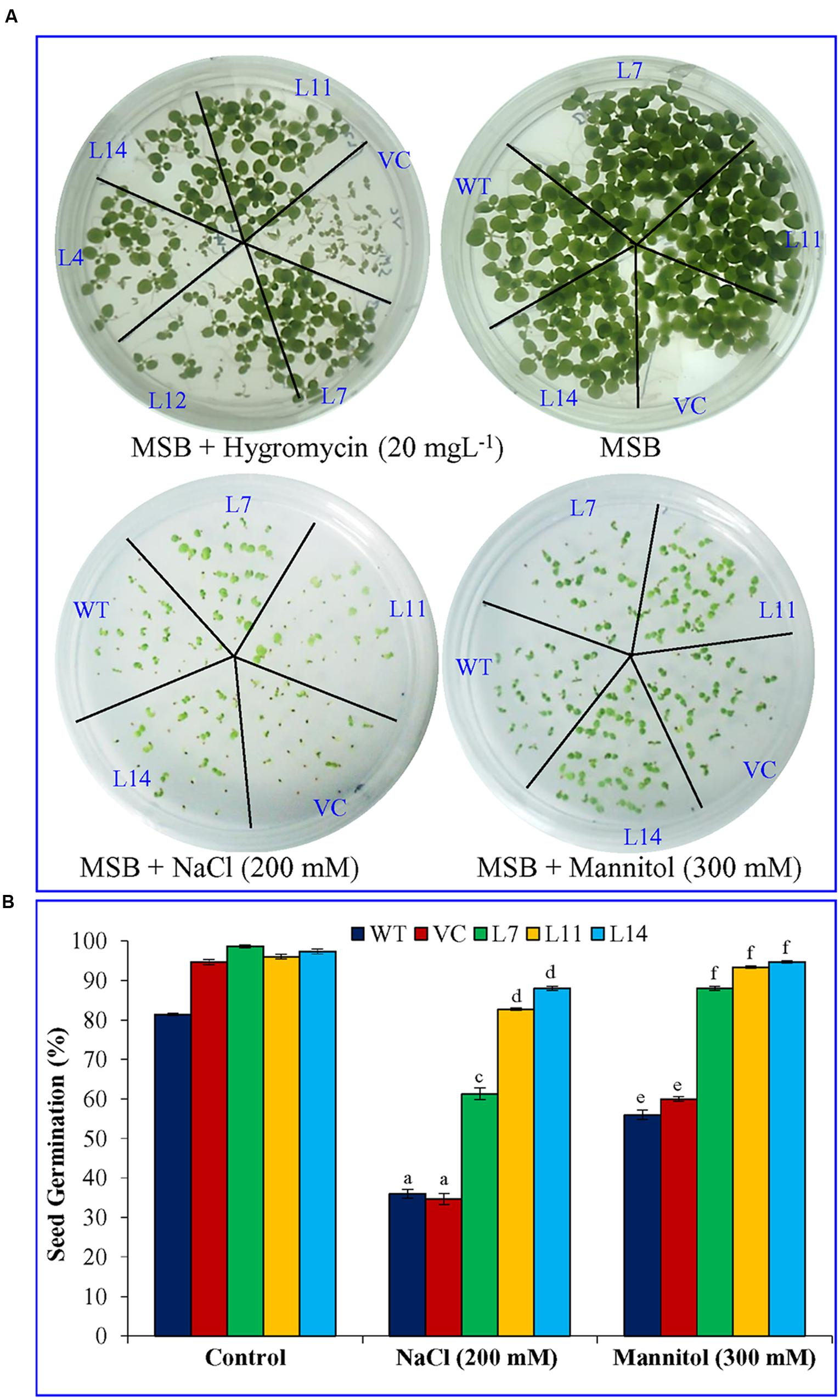 articles transgenic plants