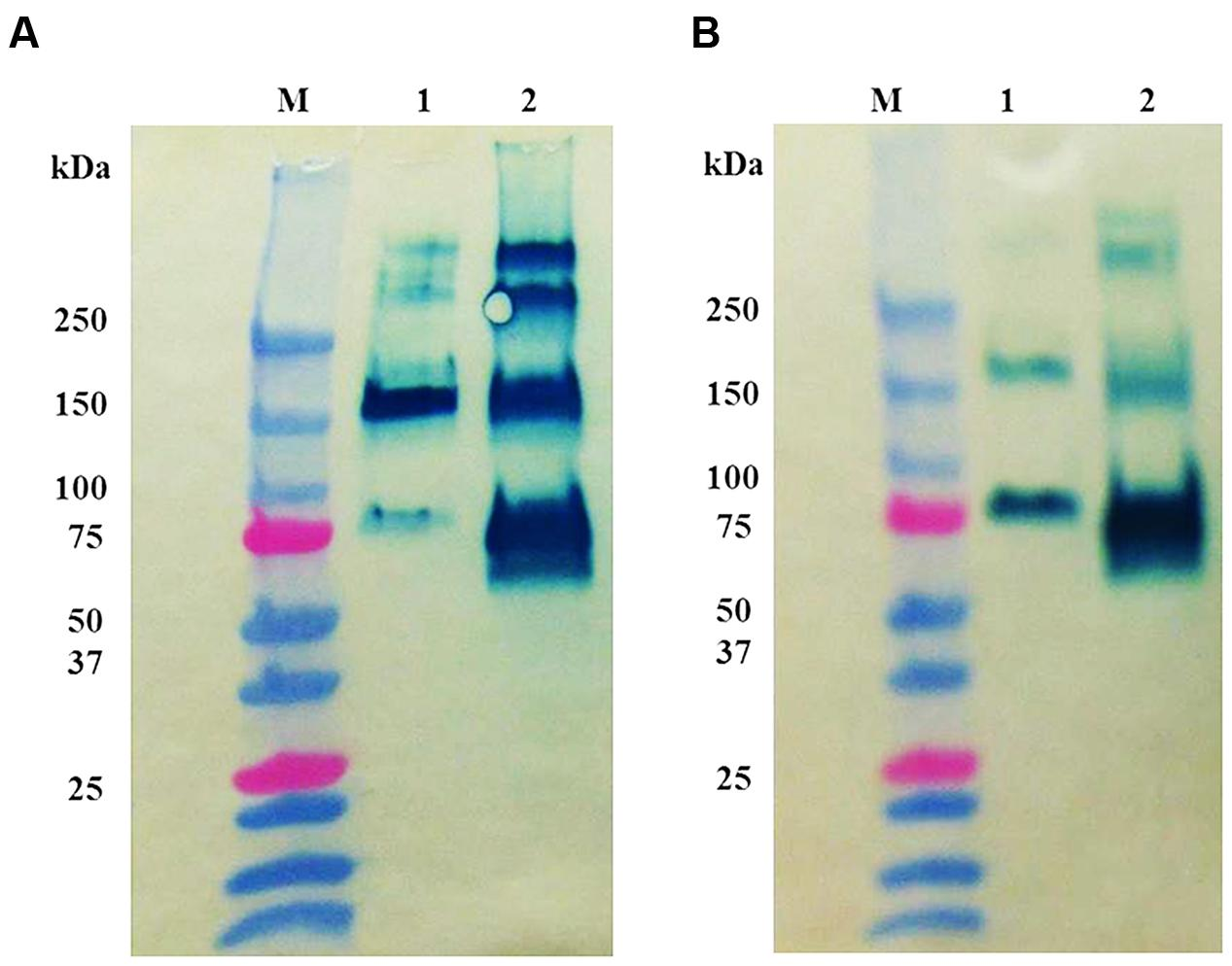 experimental analysis on enzymatic behavior of After pooling the plasma samples from each experimental and  the data acquisition of metabolomics analysis,  and performing the behavior.