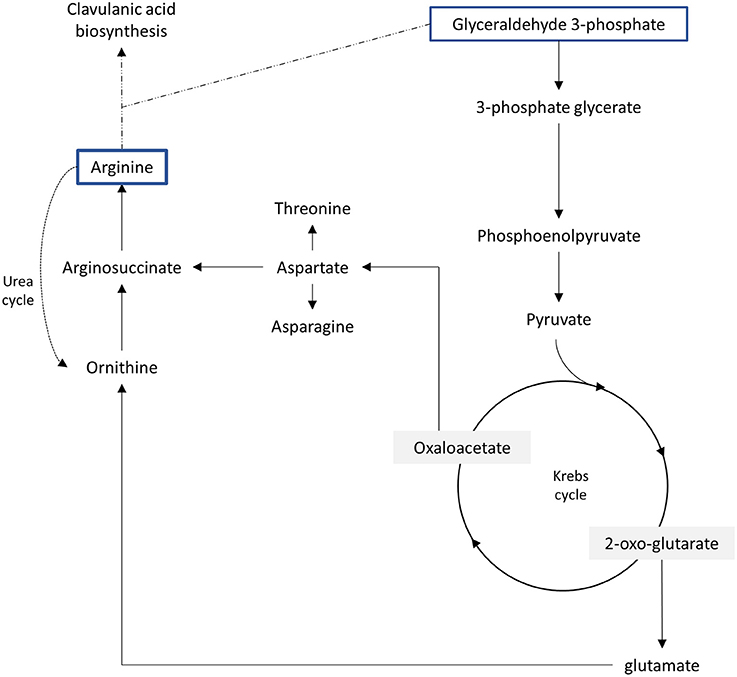 effects of osmotic stress and temperature Response to osmotic stress and temperature of the fungus ustilago maydis is a fungal pathogen which is exposed during its effect of osmotic stress on.