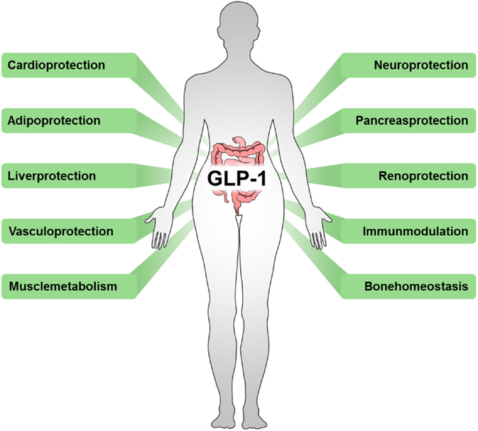 Gastric bypass surgery: improving psoriasis through a GLP-1-dependent mechanism 2