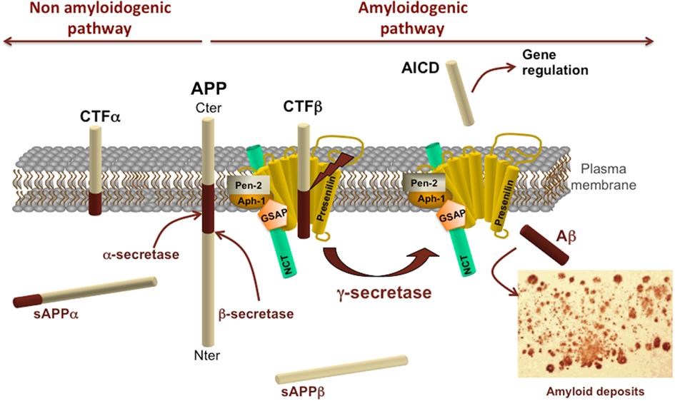 Alzheimer S Metabolism Review Nature