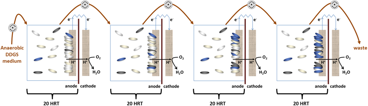 Cathodic and anodic biofilms in single chamber microbial fuel cells