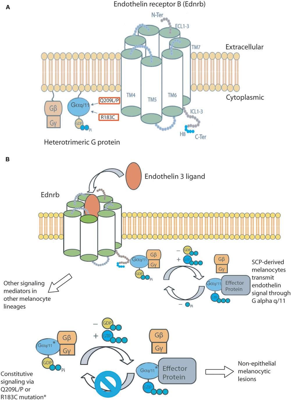 download Diversity of selenium functions in health