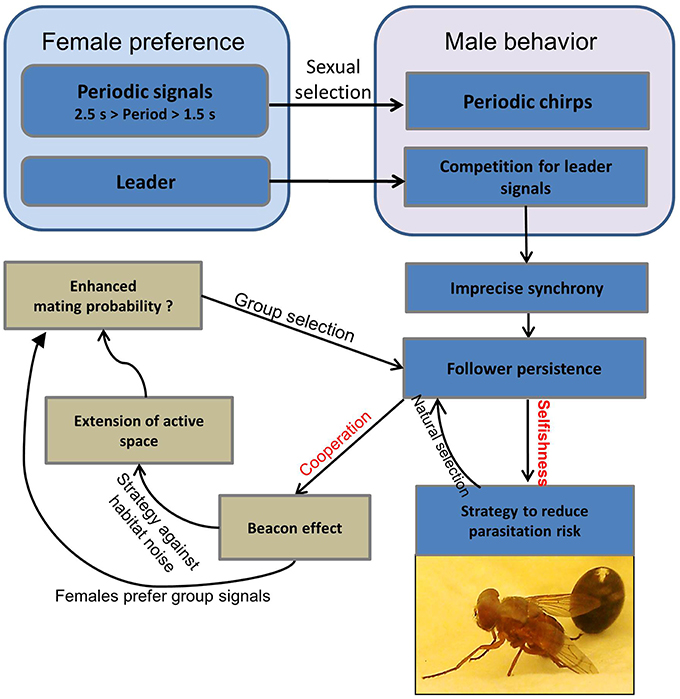 Natural Selection Favors Pathogens With