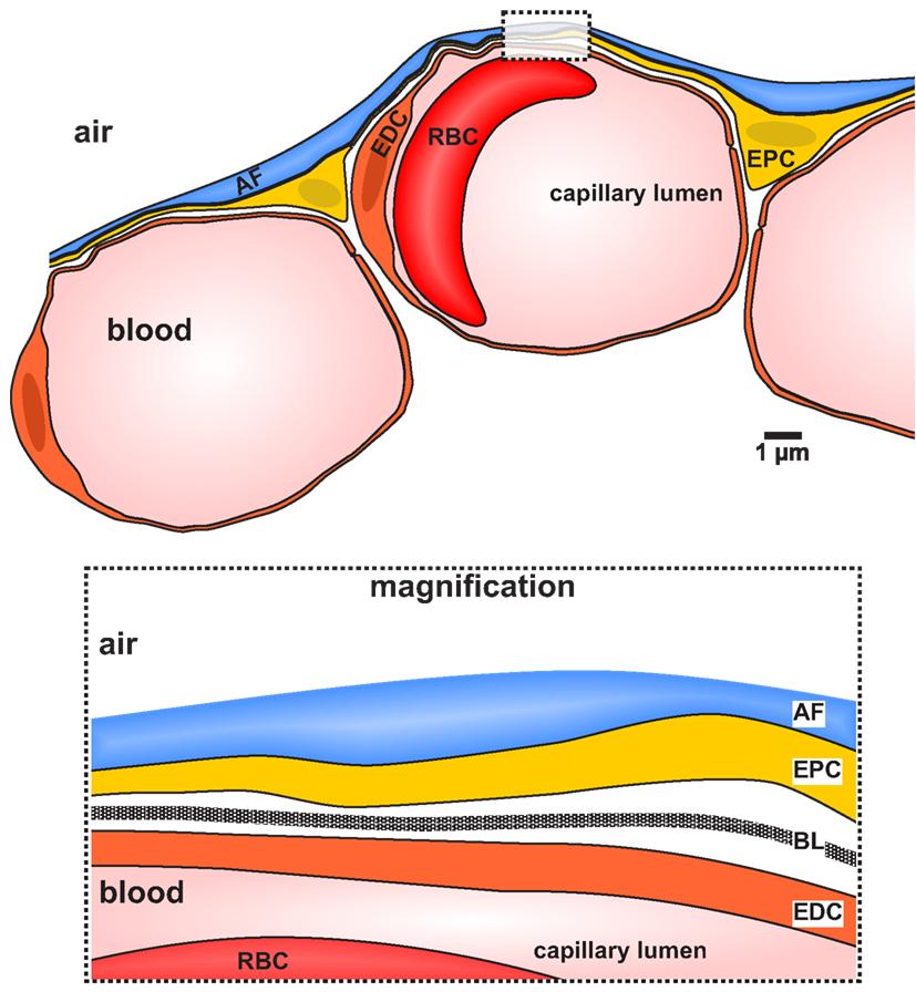 oxygen box diagram oxygen and nitrogen