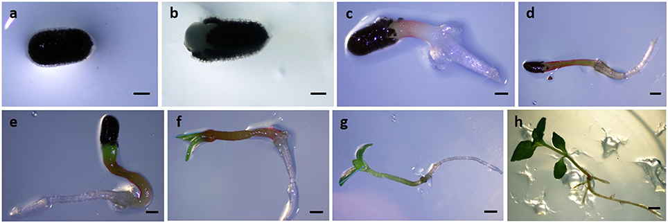 Frontiers   Alternative Oxidase Gene Family in Hypericum ...