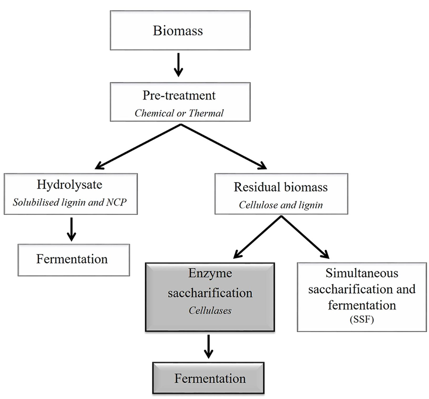 Biomass Bioconversion To Mixed Alcohol Fuels ~ Frontiers emerging technologies for the production of