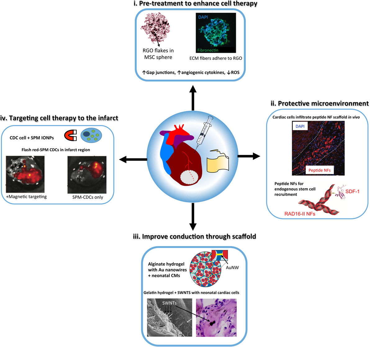 endogenous corticosteroids definition