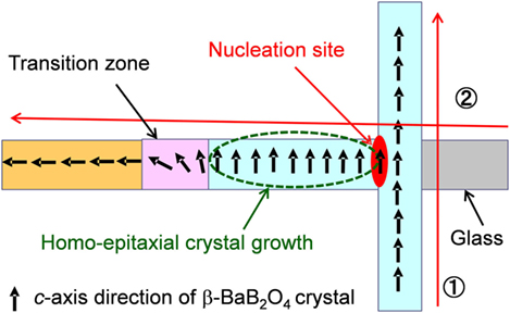 Frontiers | Nucleation and Crystal Growth in Laser-Patterned Lines in Glasses | Materials