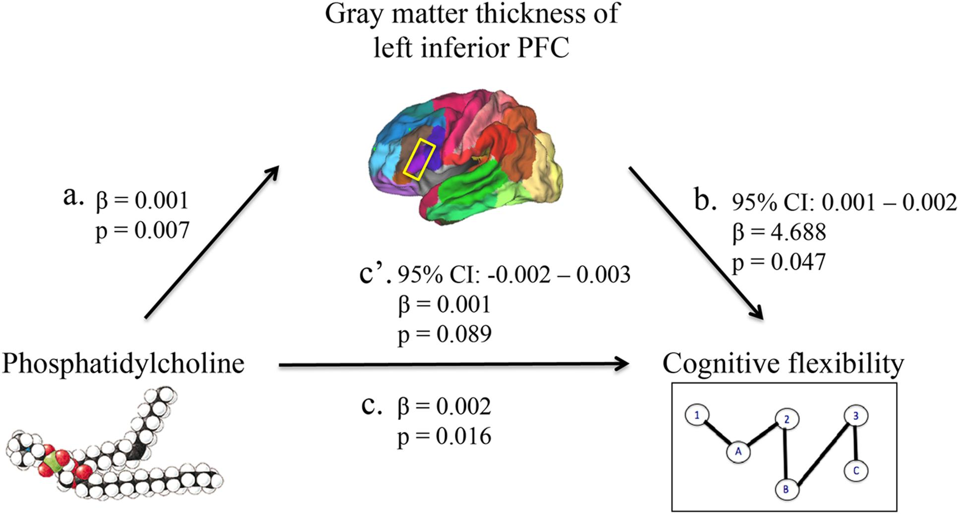 relationship between dysfunction of the prefrontal cortex With the verbal learning (vel) (r = 0265, p = 045) and the visual learning.