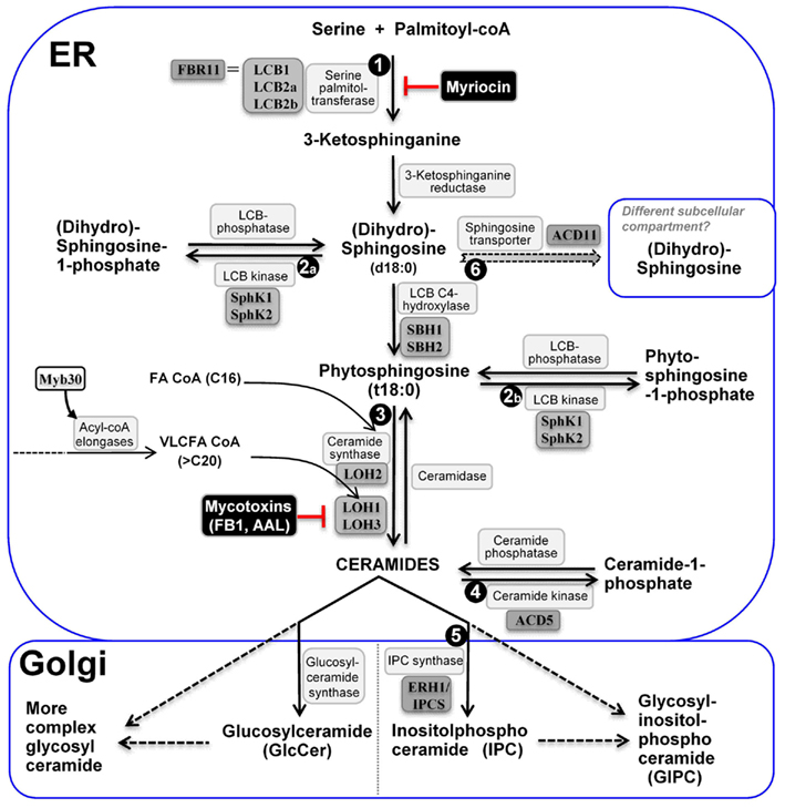 Dopaminergic Ergot Derivatives and Motor Function. Proceedings of an International Symposium Held in the Wenner–Gren Center, Stockholm, July 24–25,