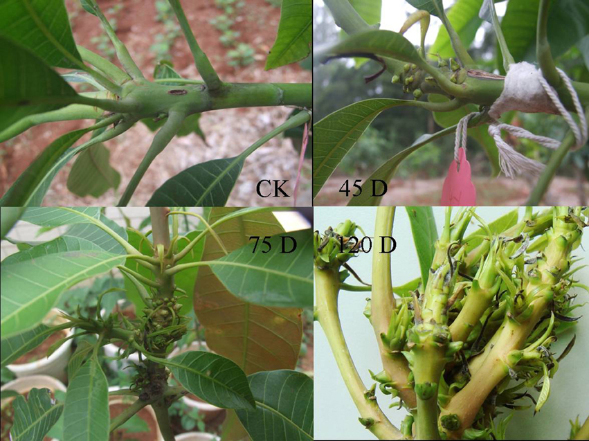cultural control of pathogenic fusarium spp essay Effect of different media and environmental conditions on the growth of fusarium  purify the pathogenic fungi fusarium oxysporum f  of.