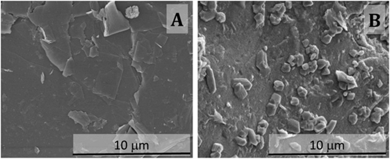 Slag Cement Microscope : Frontiers microstructural changes induced by co