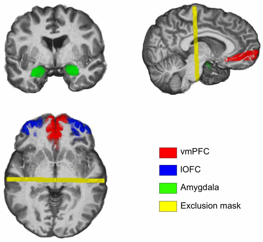 amygdala and prefrontal cortex relationship
