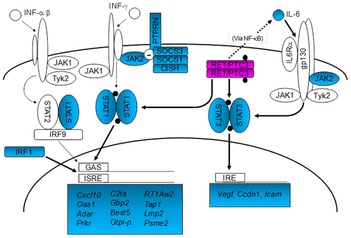 signal transduction research paper