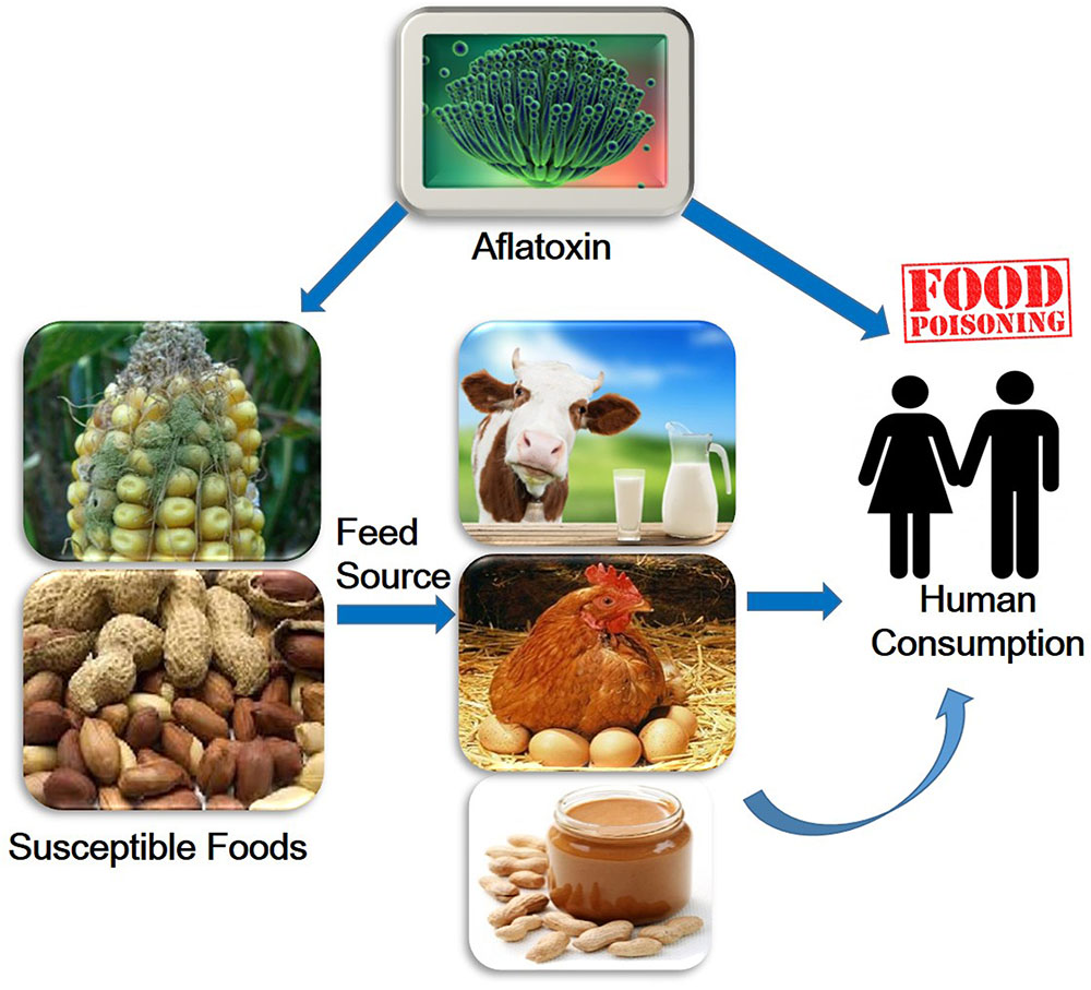 Food Safety Management Inits