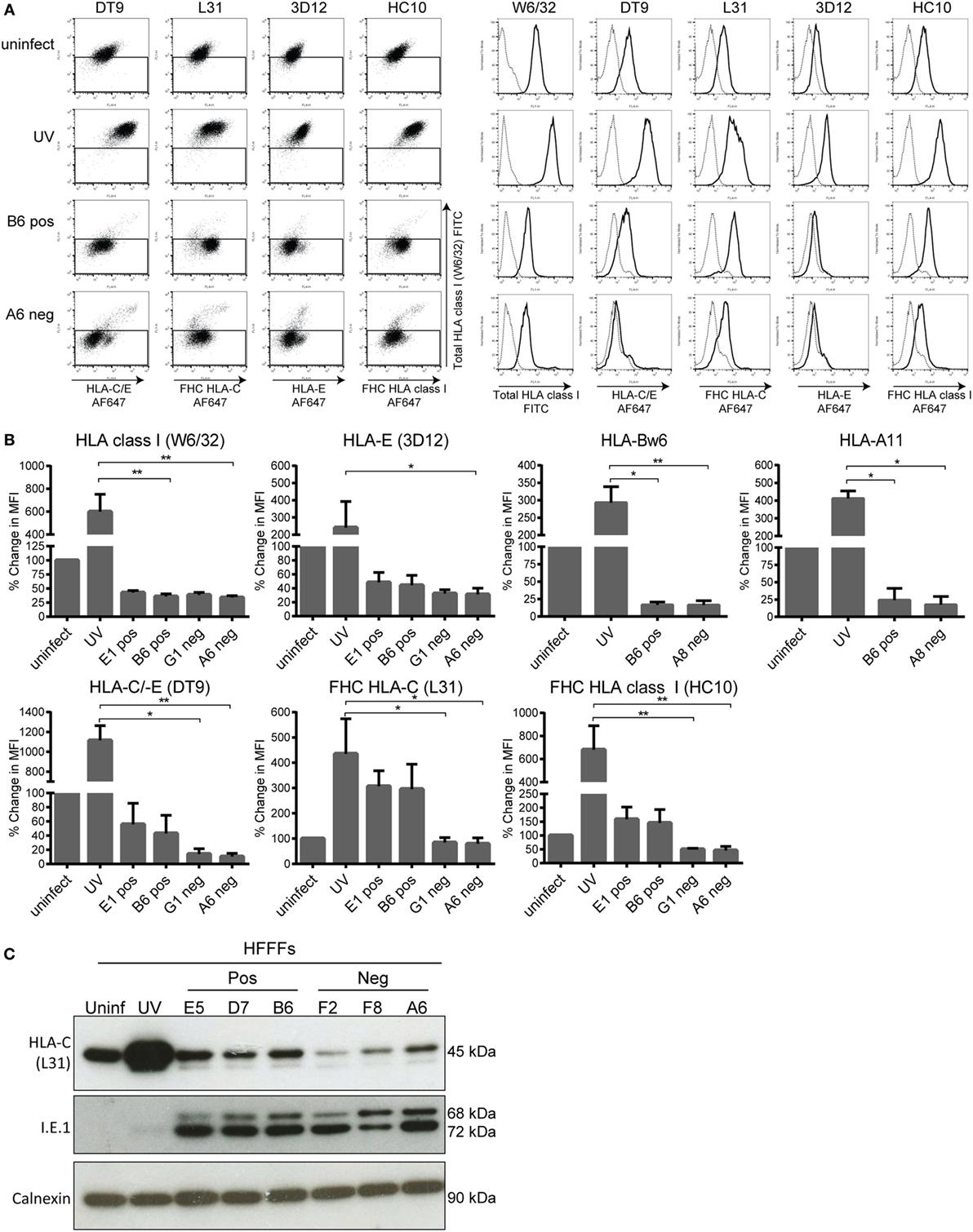 γδ T Cells and Their Potential for Immunotherapy