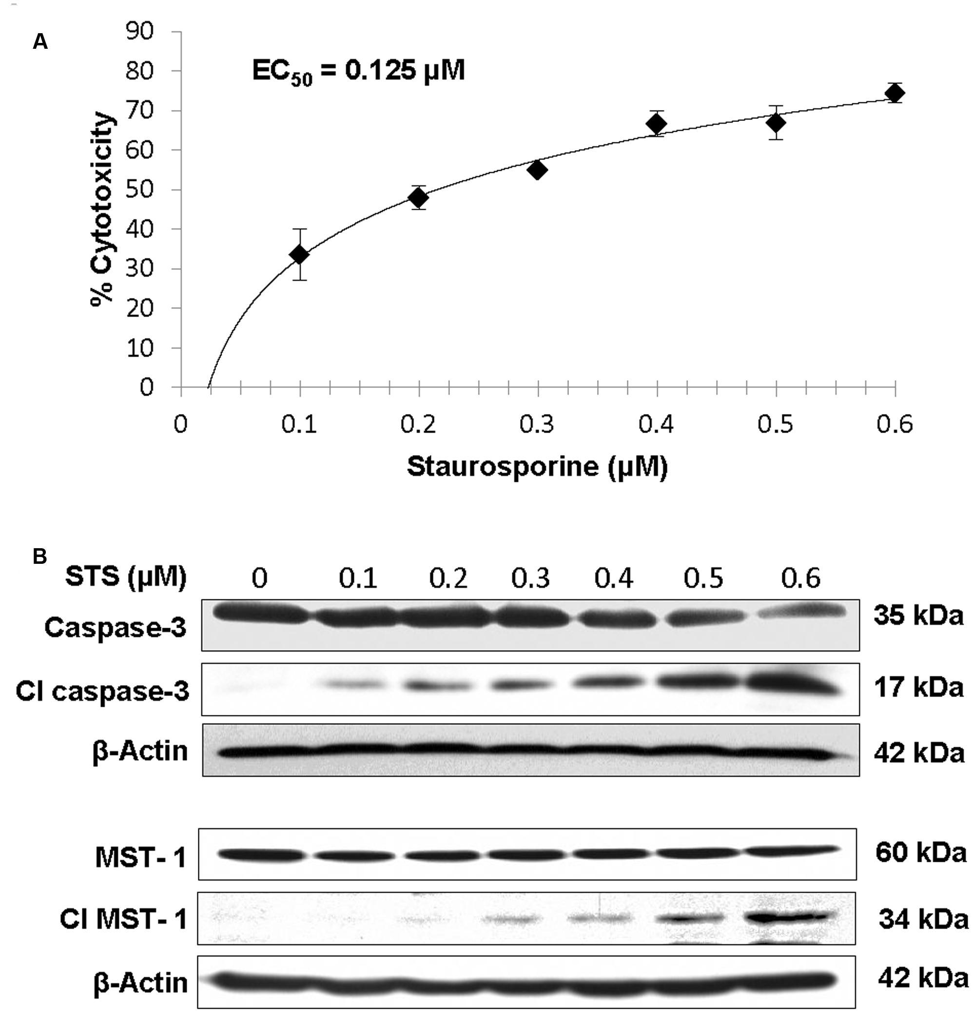 Plant-Produced Asialo-Erythropoietin Restores
