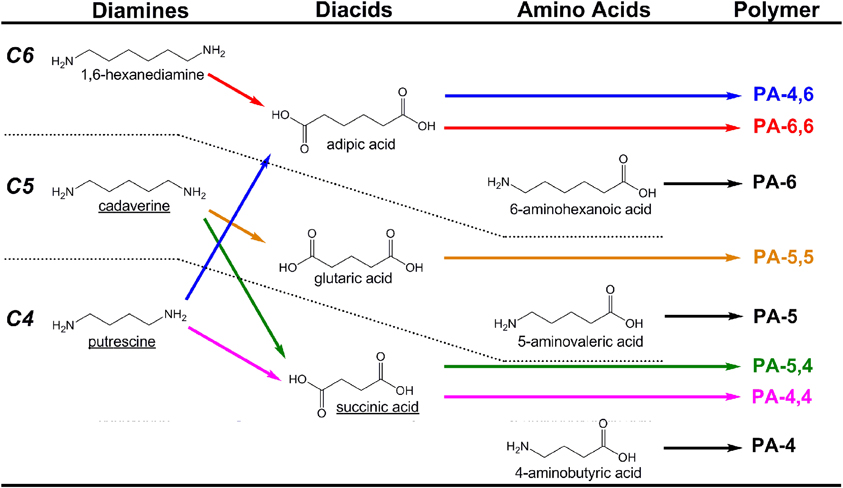 Amino acid dating example