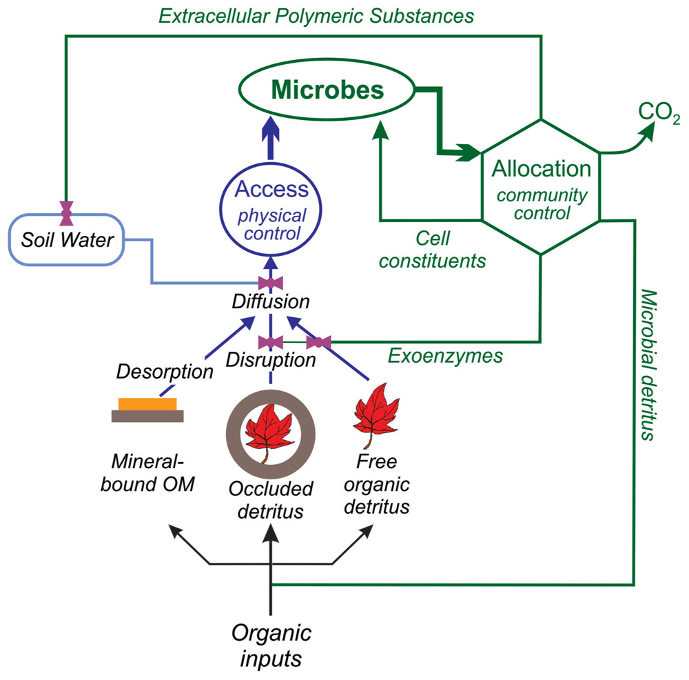 role of mycorrhizal fungi in global Application of mycorrhizal technology  mycorrhizal fungi can play an important role in improving the plant growth by increasing the  3 rd global medical.