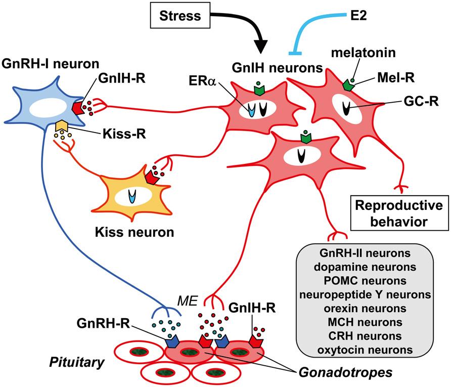 male hormone regulating supplements