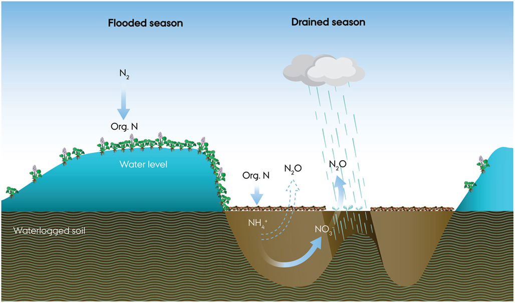 Extreme emission of N 2 O from tropical wetland soil (Pantanal, South ...