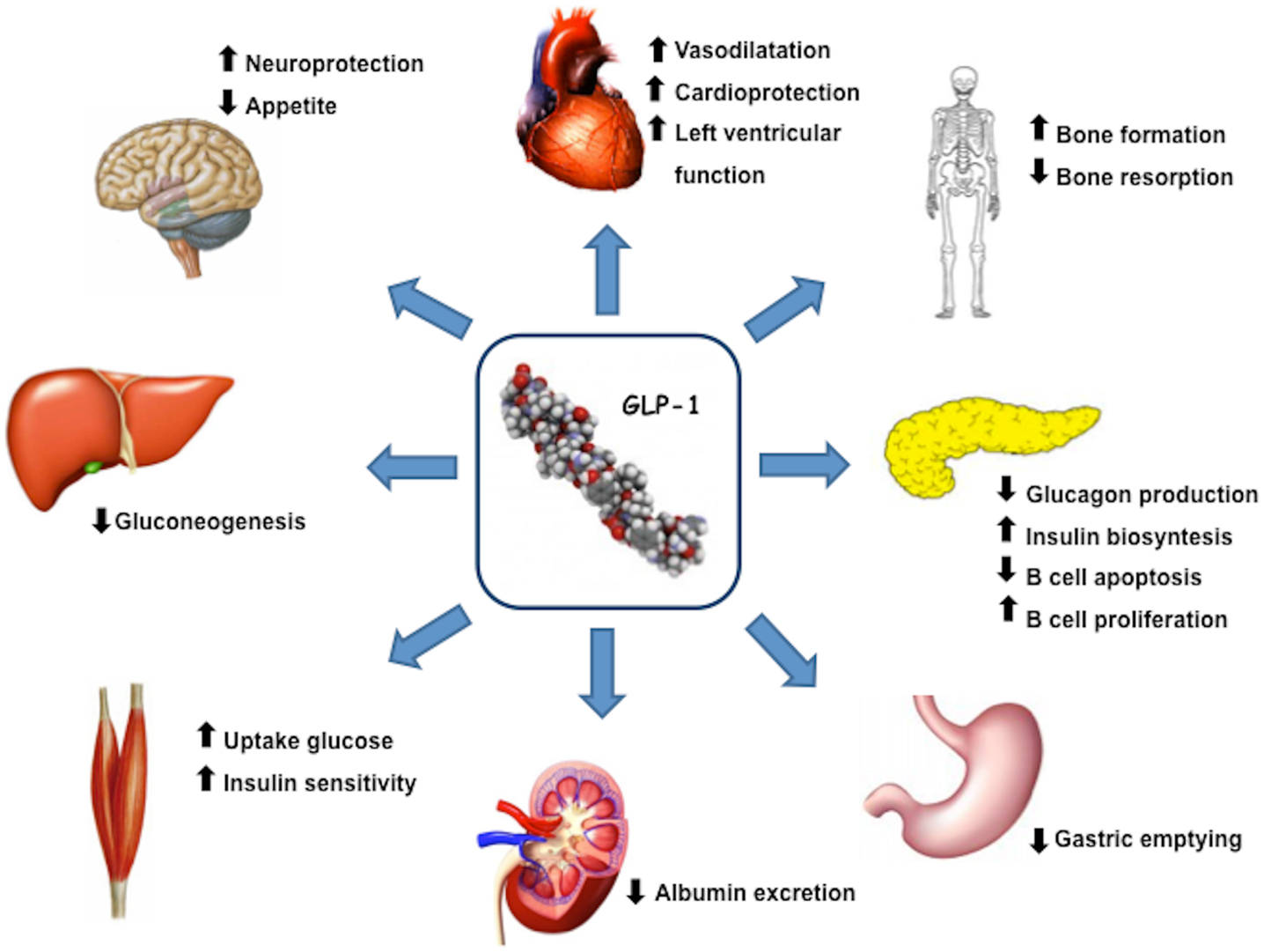 Frontiers | Beyond Glycemic Control in Diabetes Mellitus