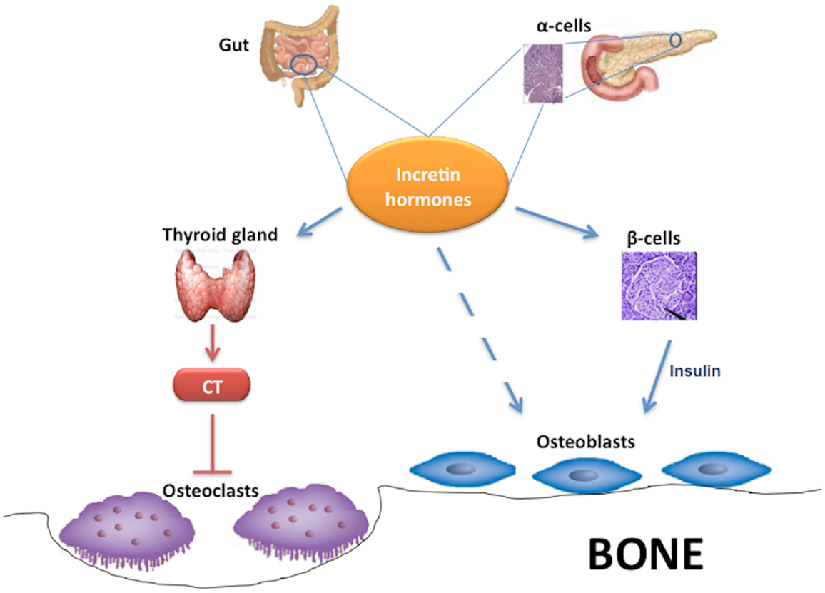 effects of anabolic steroid use in athletes