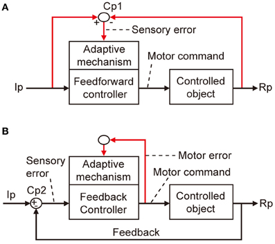 Frontiers Error Detection And Representation In The