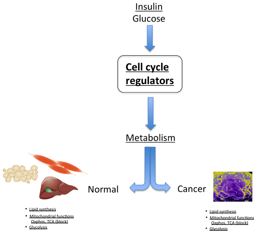 compare catabolic and anabolic pathways