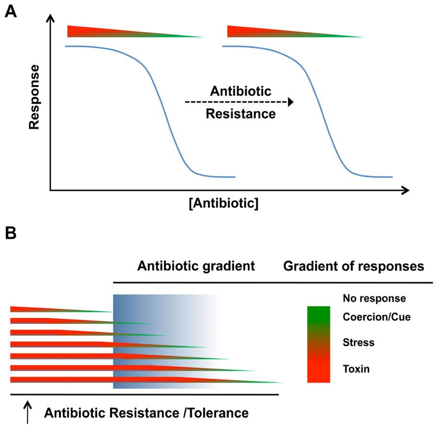 bactericidal effects of potassium iodide