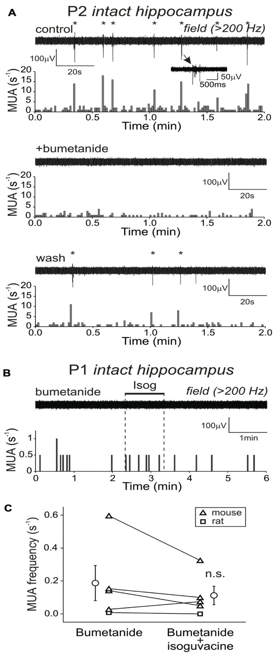 Field Potential Recording Hippocampus a Field Potential Recordings
