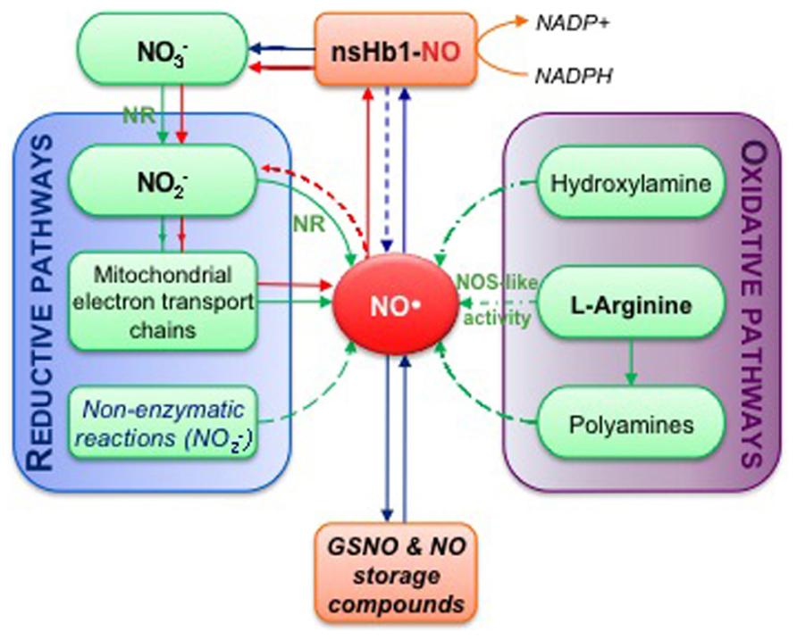 NO成分と血流と一酸化窒素