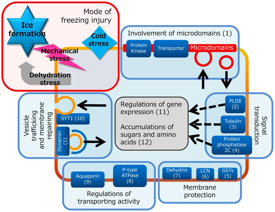 Frontiers Plant Plasma Membrane Proteomics For Improving