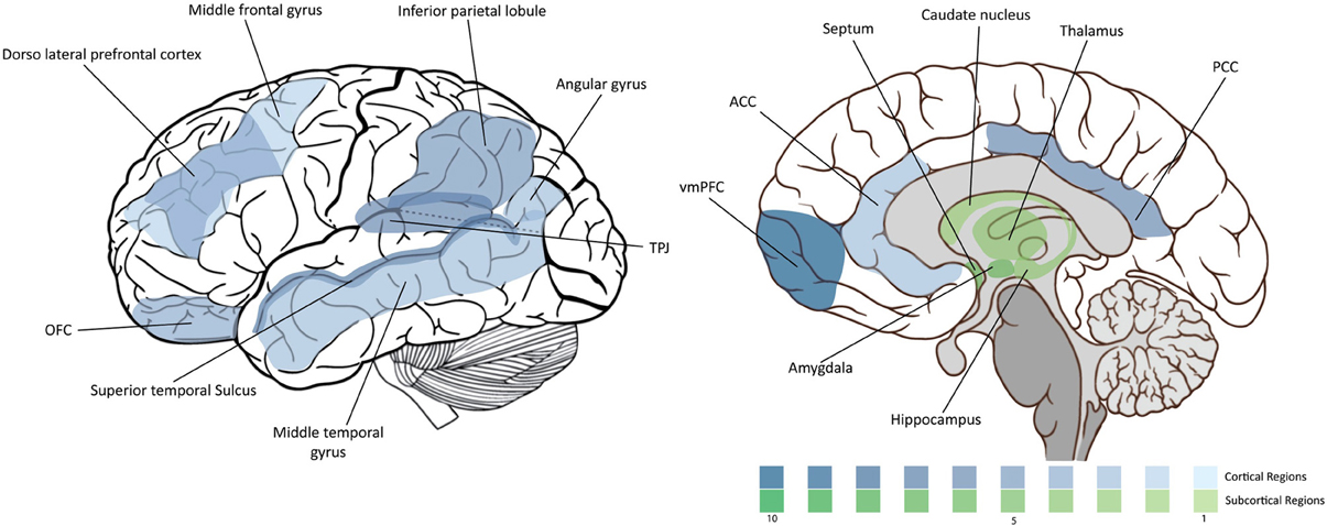 functional mri in mapping with Full on Chrt brain further Brain Science 3 How Do We Taste together with Brain Function Areas Structure Map moreover Bmjqs 2012 001712 further Brain Anatomy.