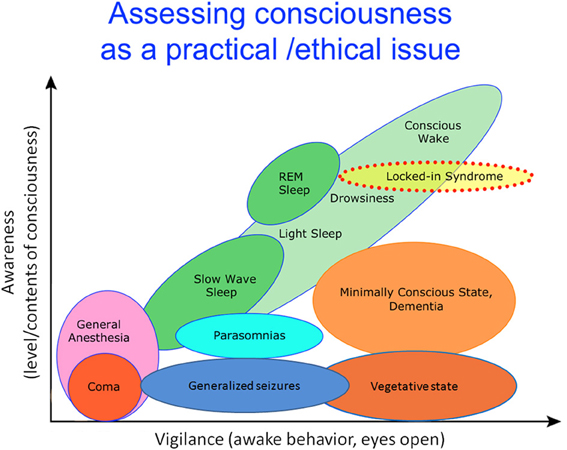 Frontiers Consciousness In Humans And Non Human Animals