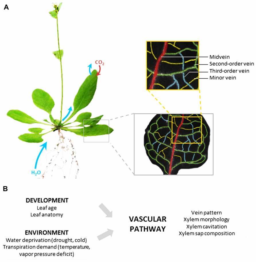 Plant Water Tracker Ecosia