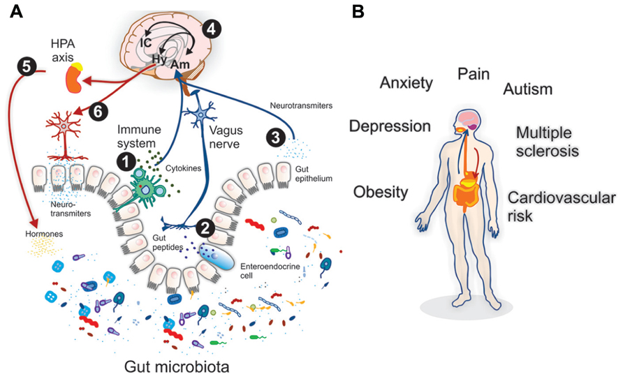 Bone Metastasis and Molecular Mechanisms: Pathophysiology