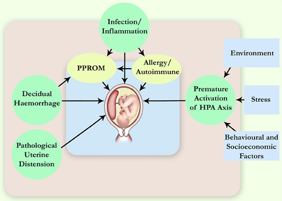 acute adrenal insufficiency steroid withdrawal
