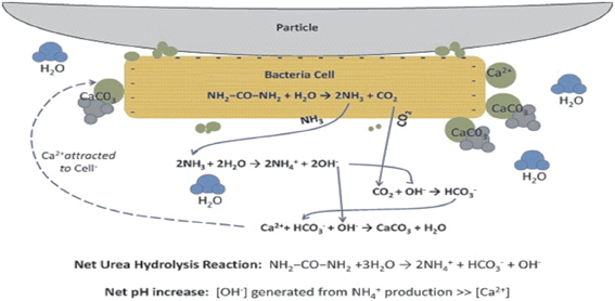 precipitation of calcium carbonate in different environments Evidence for rapid precipitation of calcium carbonate in south  represent different depositional environments,  carbonate precipitation are indicative.