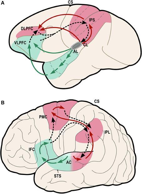 Neural Dysorder - Putrefaction
