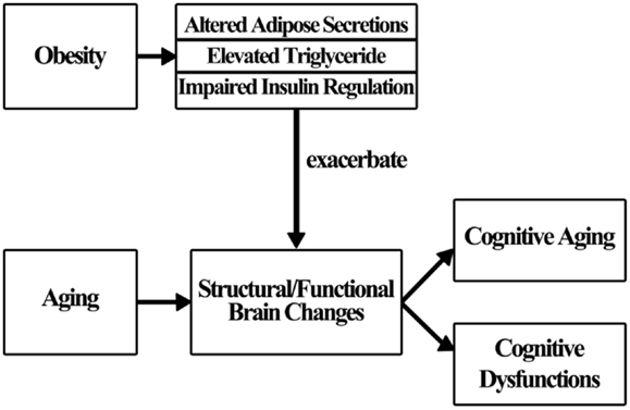 papers based on cognitive aging critique Superior memory and higher cortical volumes in unusually successful cognitive aging - volume 18 issue 6 ramón 2016 a methodological critique of the national institute of aging and alzheimer's association guidelines for alzheimer's a review of papers published since.