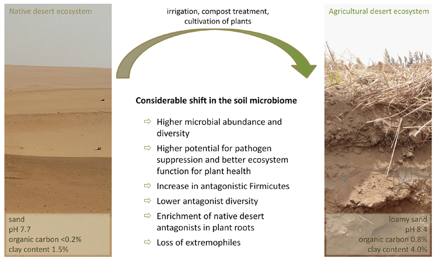 Frontiers the microbiome of medicinal plants diversity for Soil uses and its importance