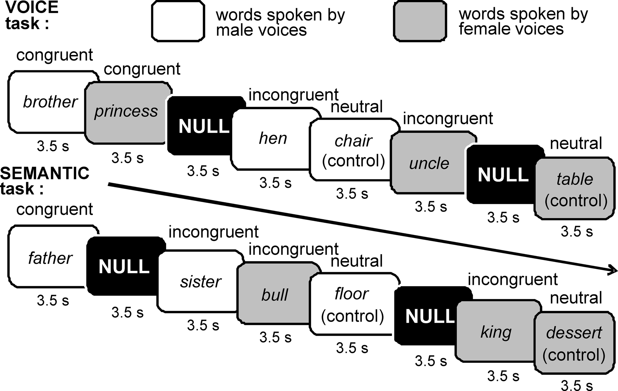 Gender Of Nouns Exercises | Top Images Archive