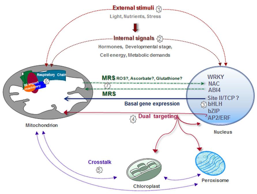 Mitochondria ccuart Choice Image