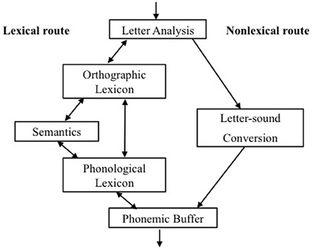 phonological theory of dyslexia Theory that seeks to explain developmental dyslexia states that a phonological awareness is required in order to acquire the grapheme-phoneme correspondence rules in.