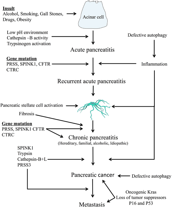 the underlying pathophysiology of cancer The major role of r mutations in cancer etiology was supported by an  a  theoretical example that illustrates the underlying conceptual basis.